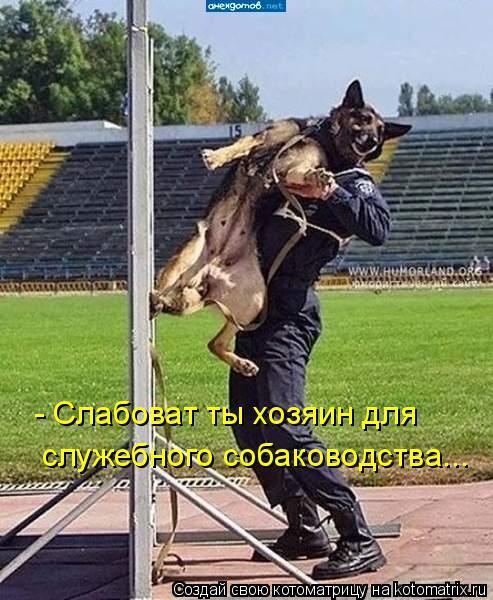 Котоматрица: - Слабоват ты хозяин для служебного собаководства...