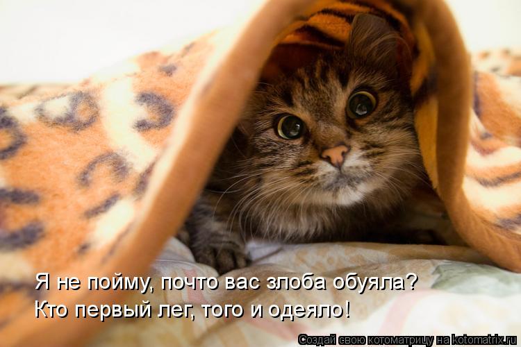 Котоматрица: Я не пойму, почто вас злоба обуяла? Кто первый лег, того и одеяло!