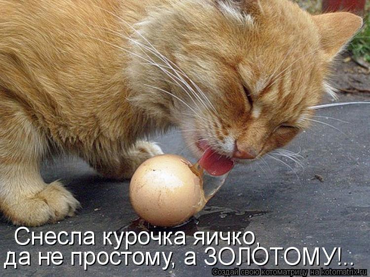 Котоматрица: Снесла курочка яичко, да не простому, а ЗОЛОТОМУ!..