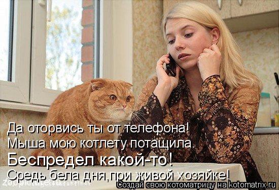 Да оторвись ты от телефона! Мыша мою котлету потащила. Беспредел какой