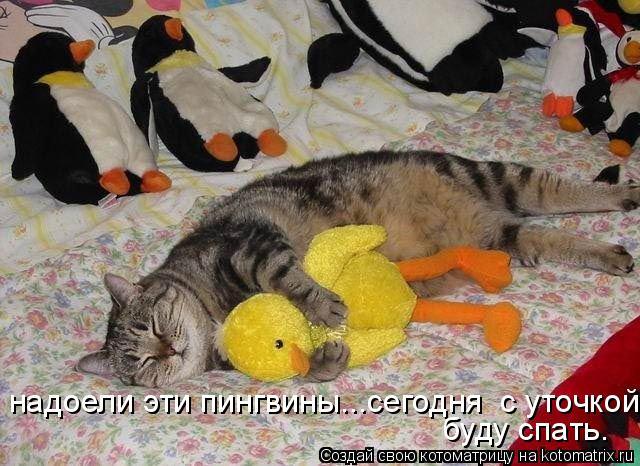Котоматрица: надоели эти пингвины...сегодня  с уточкой буду спать.