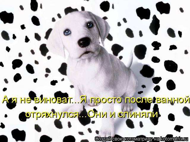 Котоматриця!)))) - Страница 3 710749