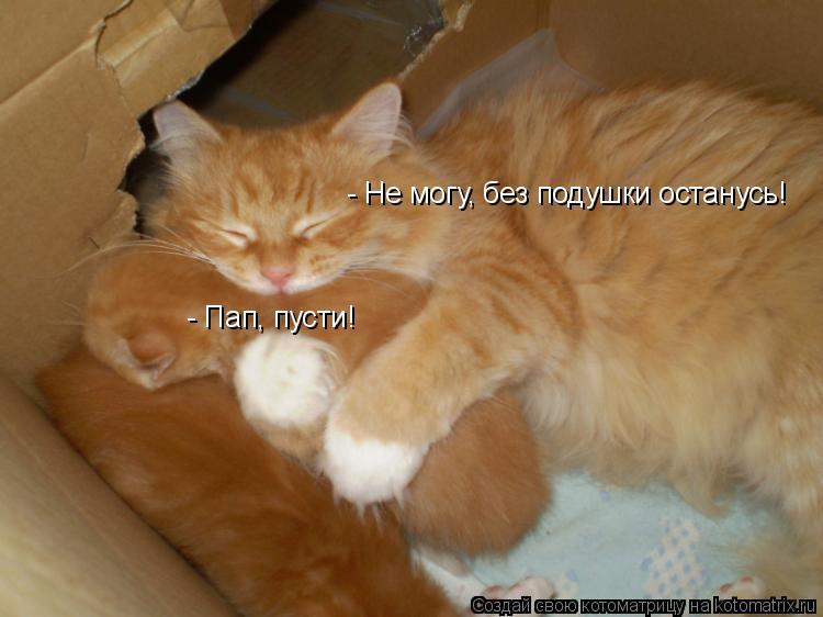 - Пап, пусти!  - Не могу, без подушки останусь!