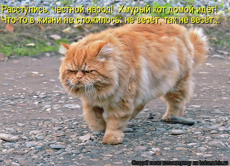Расступись, честной народ!  Хмурый кот домой идёт! Что-то в жизни не с