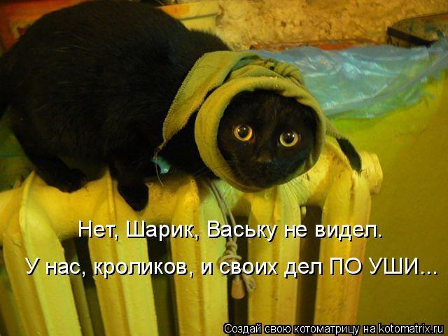 Нет, Шарик, Ваську не видел.  У нас, кроликов, и своих дел ПО УШИ...