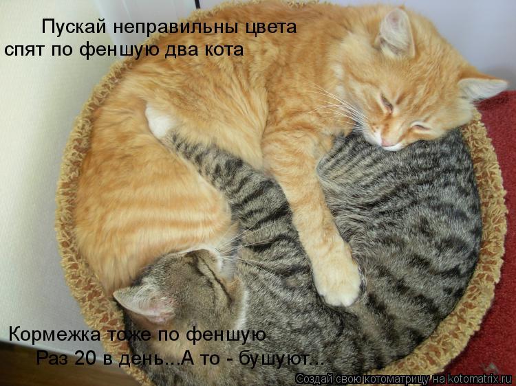 Котоматрица: Пускай неправильны цвета спят по феншую два кота Кормежка тоже по феншую Раз 20 в день...А то - бушуют...
