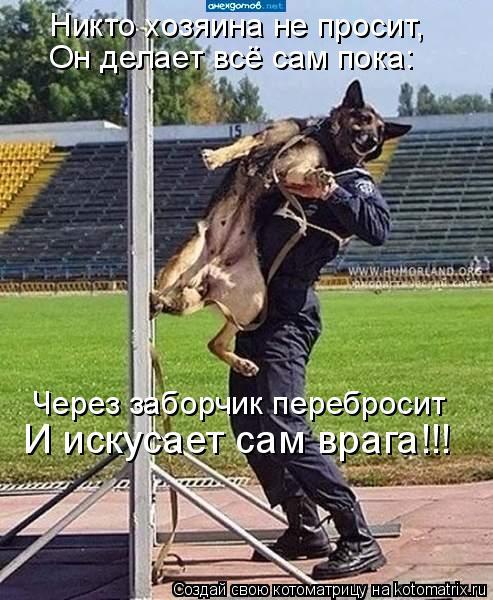 Котоматрица: Никто хозяина не просит, Через заборчик перебросит Он делает всё сам пока: И искусает сам врага!!!