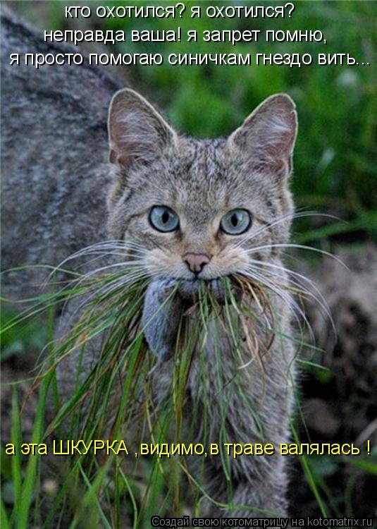 Котоматрица: кто охотился? я охотился? неправда ваша! я запрет помню, я просто помогаю синичкам гнездо вить... а эта ШКУРКА ,видимо,в траве валялась !