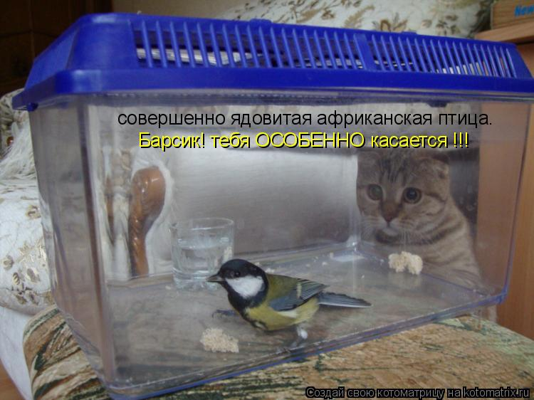 Котоматрица: совершенно ядовитая африканская птица. Барсик! тебя ОСОБЕННО касается !!!