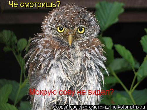 Котоматрица: Чё смотришь? Мокрую сову не видел?