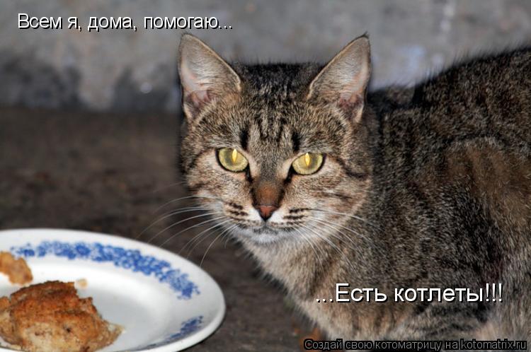 Котоматрица: Всем я, дома, помогаю... ...Есть котлеты!!!