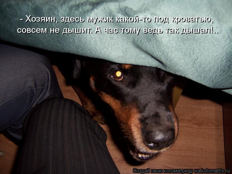 Котоматрица: - Хозяин, здесь мужик какой-то под кроватью,  совсем не дышит. А час тому ведь так дышал!..