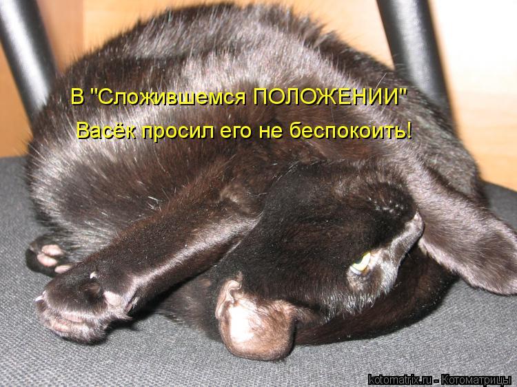 """В """"Сложившемся ПОЛОЖЕНИИ"""" Васёк просил его не беспокоить!"""