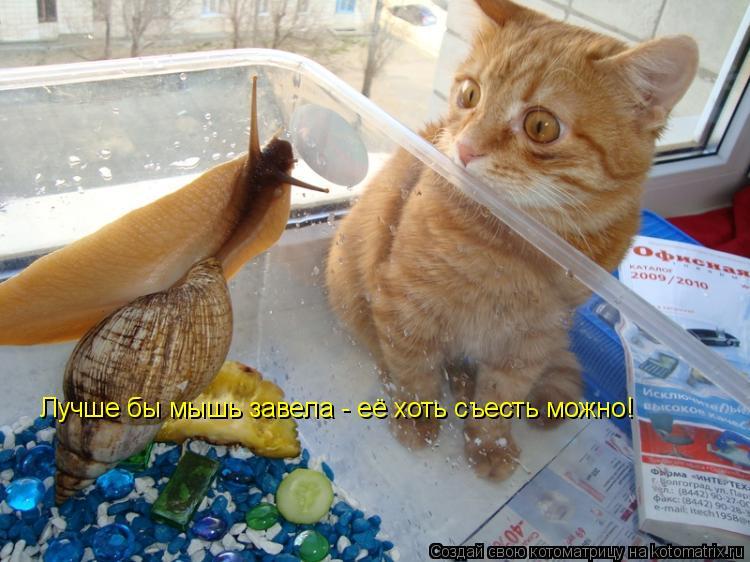 Котоматрица: Лучше бы мышь завела - её хоть съесть можно!