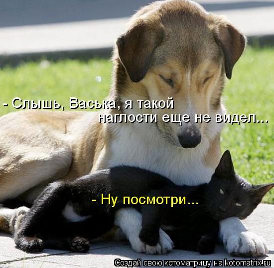 Котоматрица: - Слышь, Васька, я такой наглости еще не видел... - Ну посмотри...