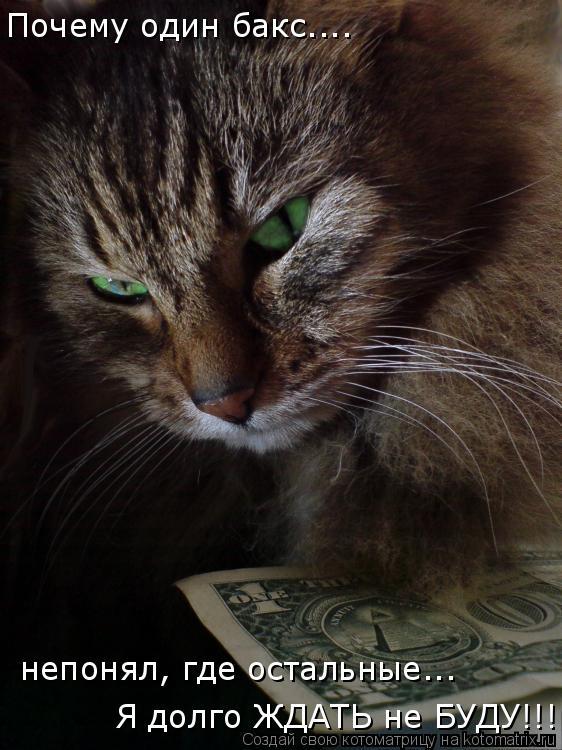 Котоматрица: Почему один бакс....  непонял, где остальные... Я долго ЖДАТЬ не БУДУ!!!