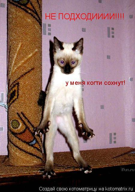 Котоматрица: НЕ ПОДХОДИИИИ!!!! у меня когти сохнут!