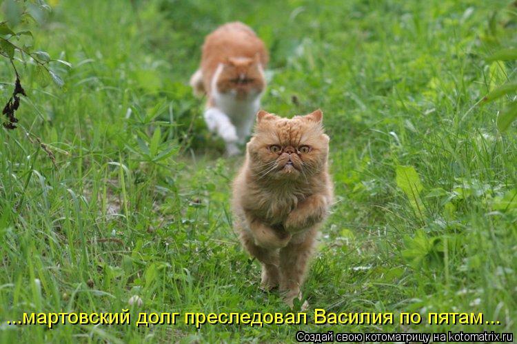 Котоматрица: ...мартовский долг преследовал Василия по пятам...