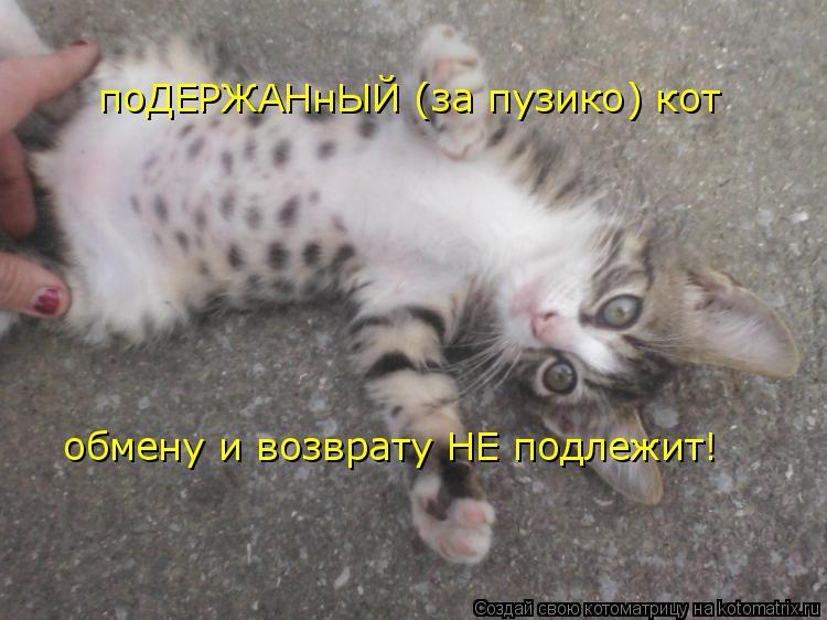 Котоматрица: поДЕРЖАНнЫЙ (за пузико) кот обмену и возврату НЕ подлежит!