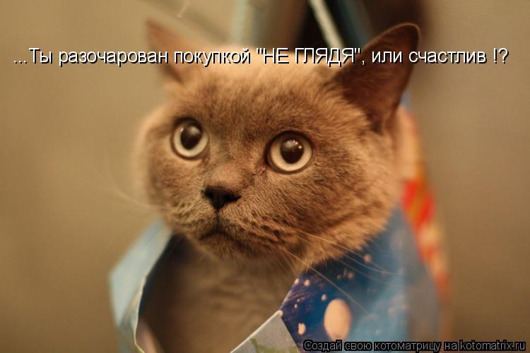 """Котоматрица: ...Ты разочарован покупкой """"НЕ ГЛЯДЯ"""", или счастлив !?"""