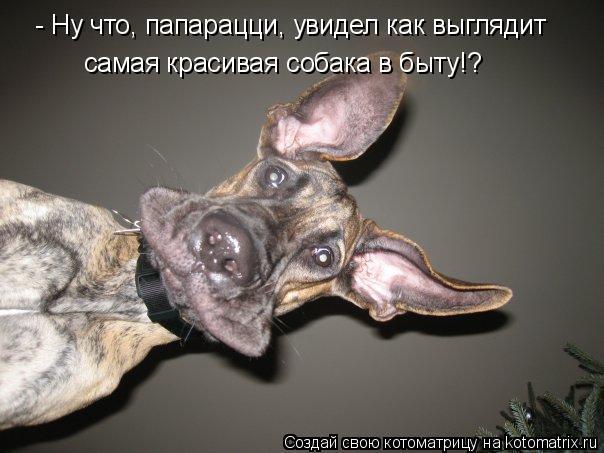 - Ну что, папарацци, увидел как выглядит самая красивая собака в быту!