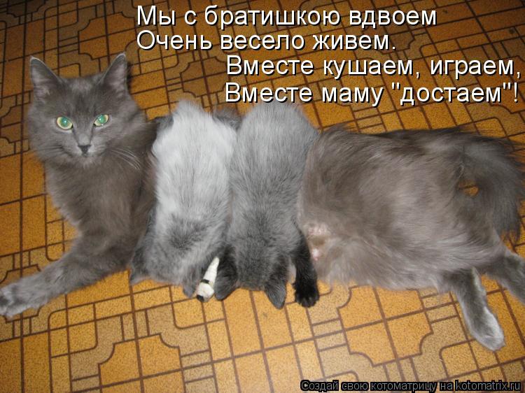 """Котоматрица: Мы с братишкою вдвоем Очень весело живем. Вместе кушаем, играем, Вместе маму """"достаем""""!"""