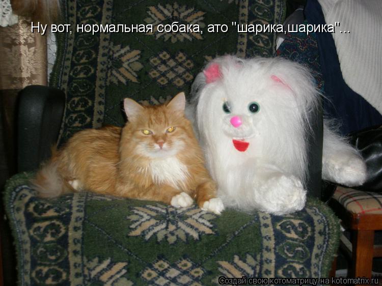"Котоматрица: Ну вот, нормальная собака, ато ""шарика,шарика""..."