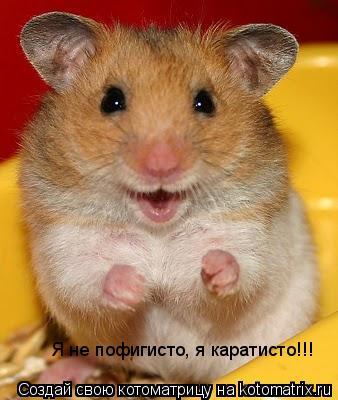 Котоматрица: Я не пофигисто, я каратисто!!!