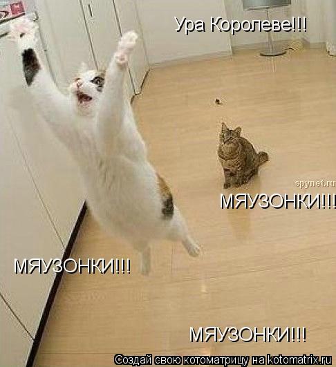 Котоматрица: Ура Королеве!!! МЯУЗОНКИ!!! МЯУЗОНКИ!!! МЯУЗОНКИ!!!