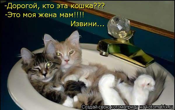 Котоматрица: -Дорогой, кто эта кошка??? -Это моя жена мам!!!! Извини...