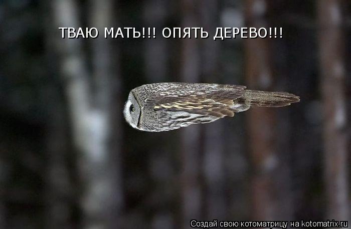 Котоматрица: ТВАЮ МАТЬ!!! ОПЯТЬ ДЕРЕВО!!!