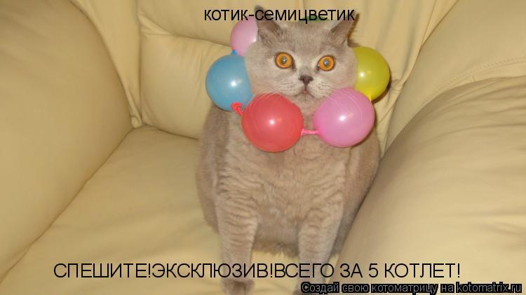 Котоматрица: котик-семицветик СПЕШИТЕ!ЭКСКЛЮЗИВ! ВСЕГО ЗА 5 КОТЛЕТ!