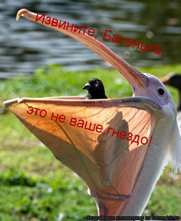 Котоматрица: Извините, Батенька, это не ваше гнездо!