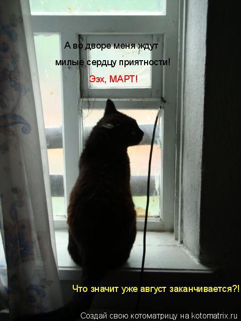 Котоматрица: А во дворе меня ждут  милые сердцу приятности! Ээх, МАРТ! Что значит уже август заканчивается?!