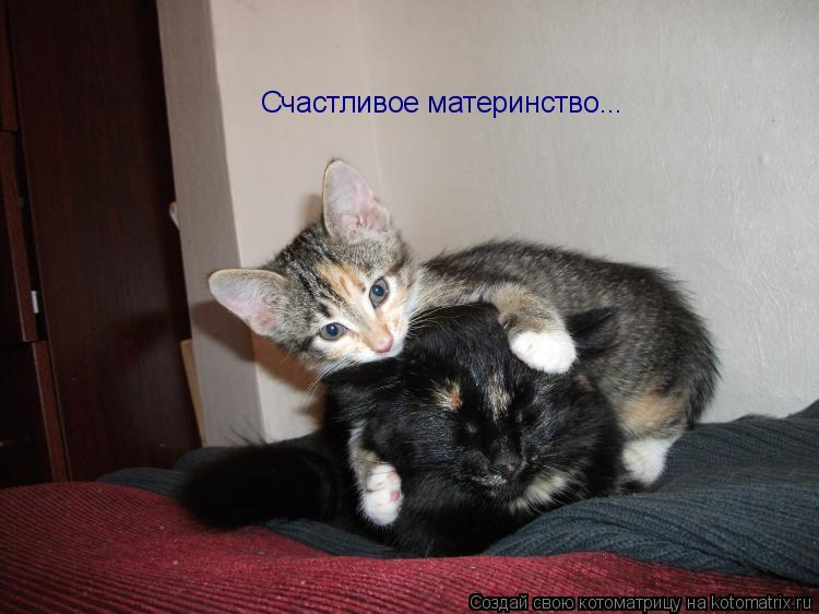 Котоматрица: Счастливое материнство...