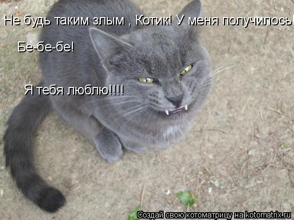 Котоматрица: Не будь таким злым , Котик! У меня получилось!!!!!!!!!!!!!!!!!!!!!!!!!!!!!!!!!!!!!! Бе-бе-бе!  Я тебя люблю!!!!