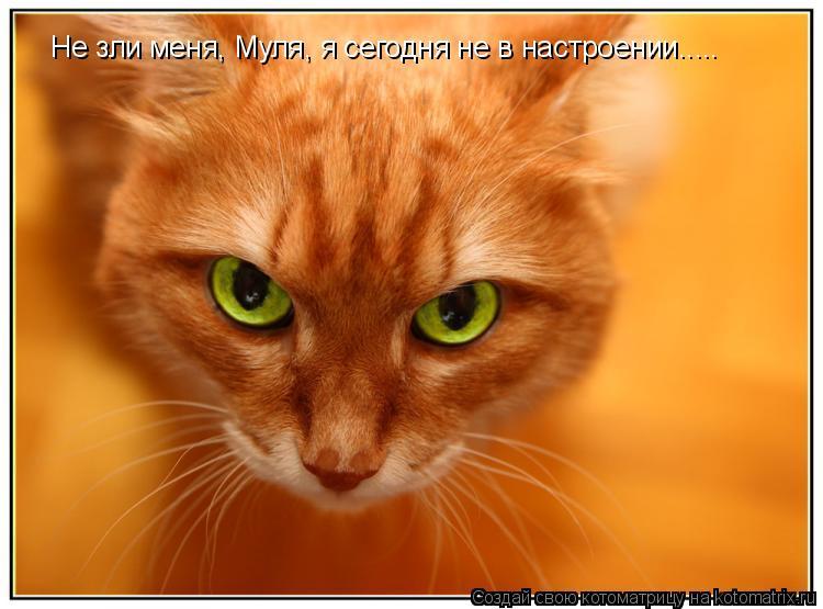 Котоматрица: Не зли меня, Муля, я сегодня не в настроении.....