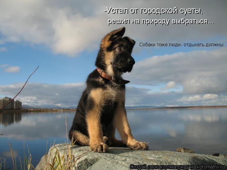 Котоматрица: -Устал от городской суеты,  решил на природу выбраться... Собаки тоже люди- отдыхать должны.