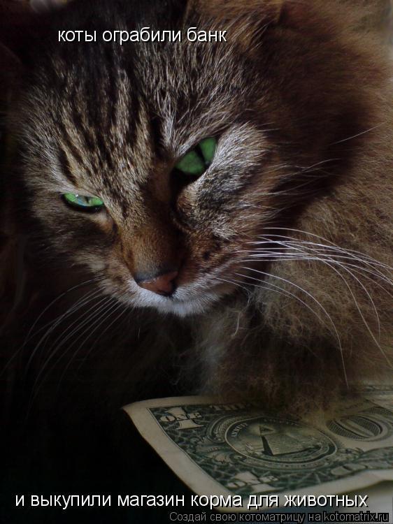 Котоматрица: коты ограбили банк и выкупили магазин корма для животных