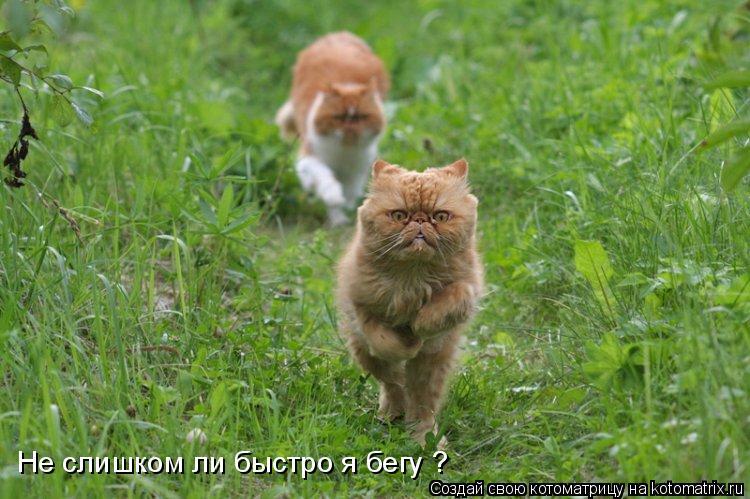 Котоматрица: Не слишком ли быстро я бегу ?