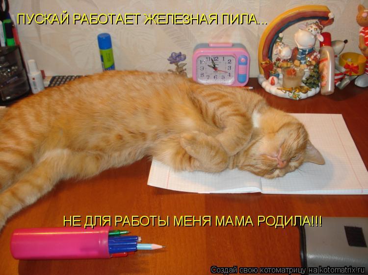 Котоматрица: ПУСКАЙ РАБОТАЕТ ЖЕЛЕЗНАЯ ПИЛА...  НЕ ДЛЯ РАБОТЫ МЕНЯ МАМА РОДИЛА!!!