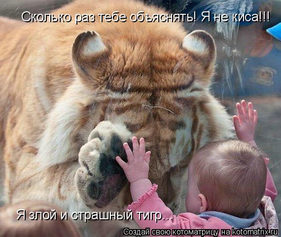 Котоматрица: Сколько раз тебе объяснять! Я не киса!!! Я злой и страшный тигр...