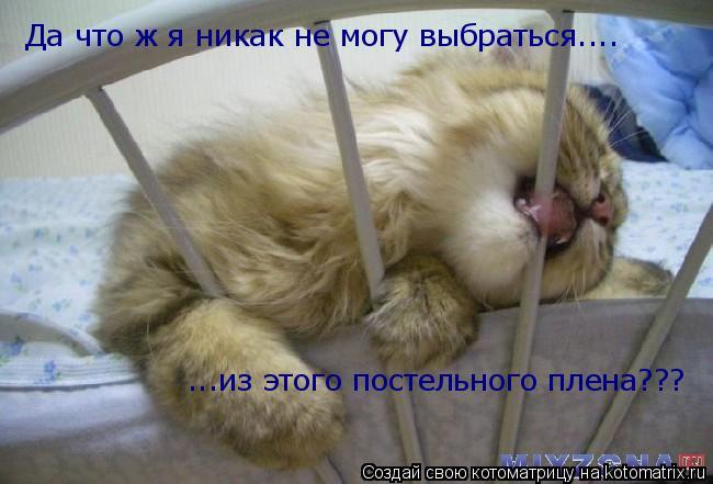 Котоматрица: Да что ж я никак не могу выбраться.... ...из этого постельного плена???