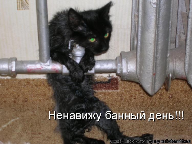 Котоматрица: Ненавижу банный день!!!