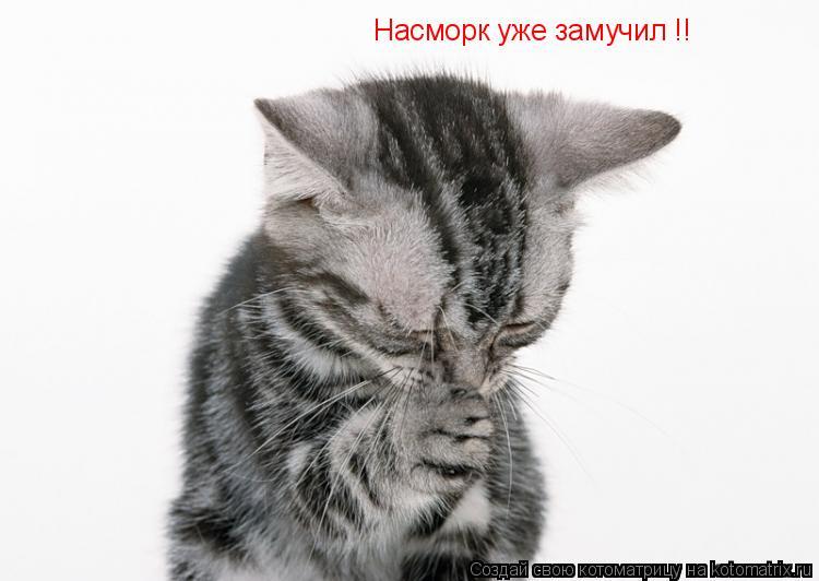 Котоматрица: Насморк уже замучил !!