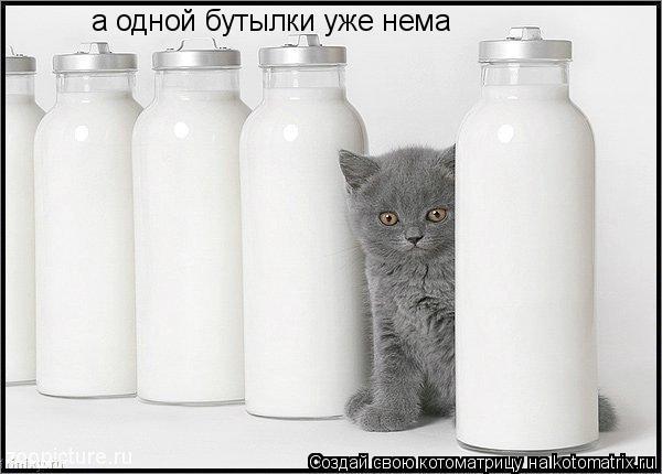 Котоматрица: а одной бутылки уже нема