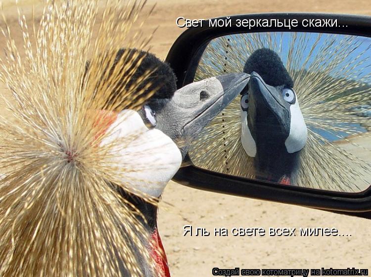 Котоматрица: Свет мой зеркальце скажи... Я ль на свете всех милее....