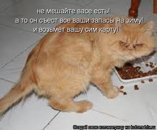 Котоматрица: не мешайте васе есть! а то он съест все ваши запасы на зиму! и возьмёт вашу сим карту!