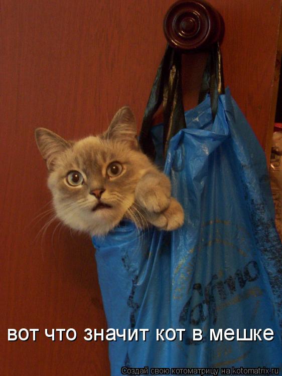 Котоматрица: вот что значит кот в мешке
