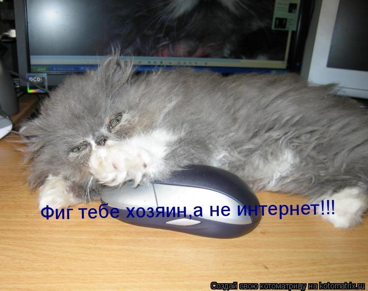 Котоматрица: Фиг тебе хозяин,а не интернет!!!